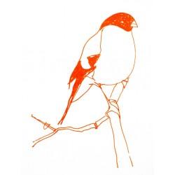 Bullfinch - Print